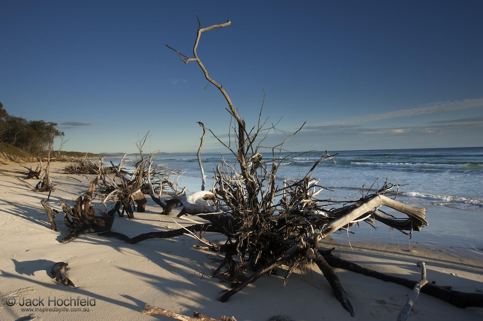 Uprooted trees, Belongil beach, Byron Bay - Uprooted trees, Belongil beach, Byron Bay