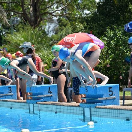 Primary-Swimming-Carnival-2016-531
