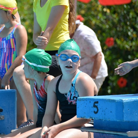 Primary-Swimming-Carnival-2016-528