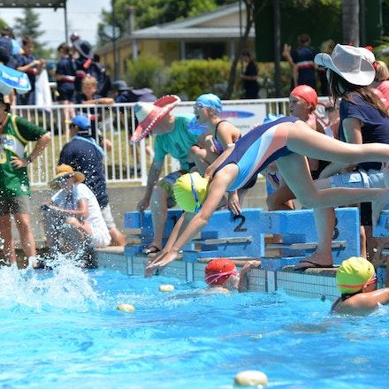 Primary-Swimming-Carnival-2016-516