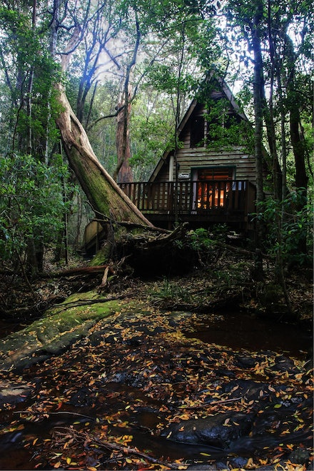 The Mouses House - Springbrook National Park, Queensland. 2009. Not available for sale.