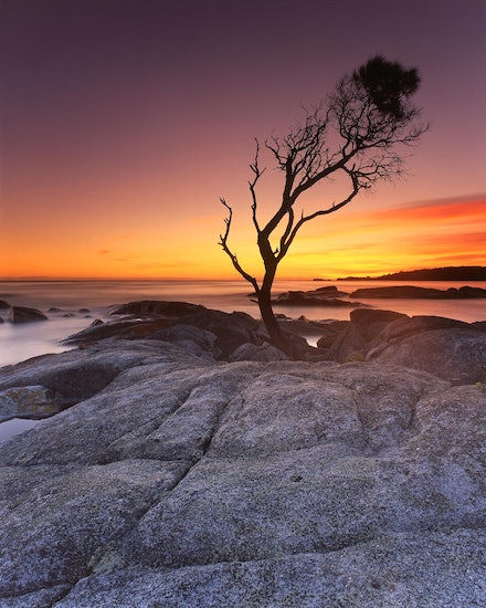 That Tree - Binalong Bay, TAS. 2012.