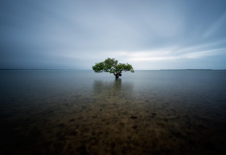 I Stand Alone - King Island, QLD. 2012.