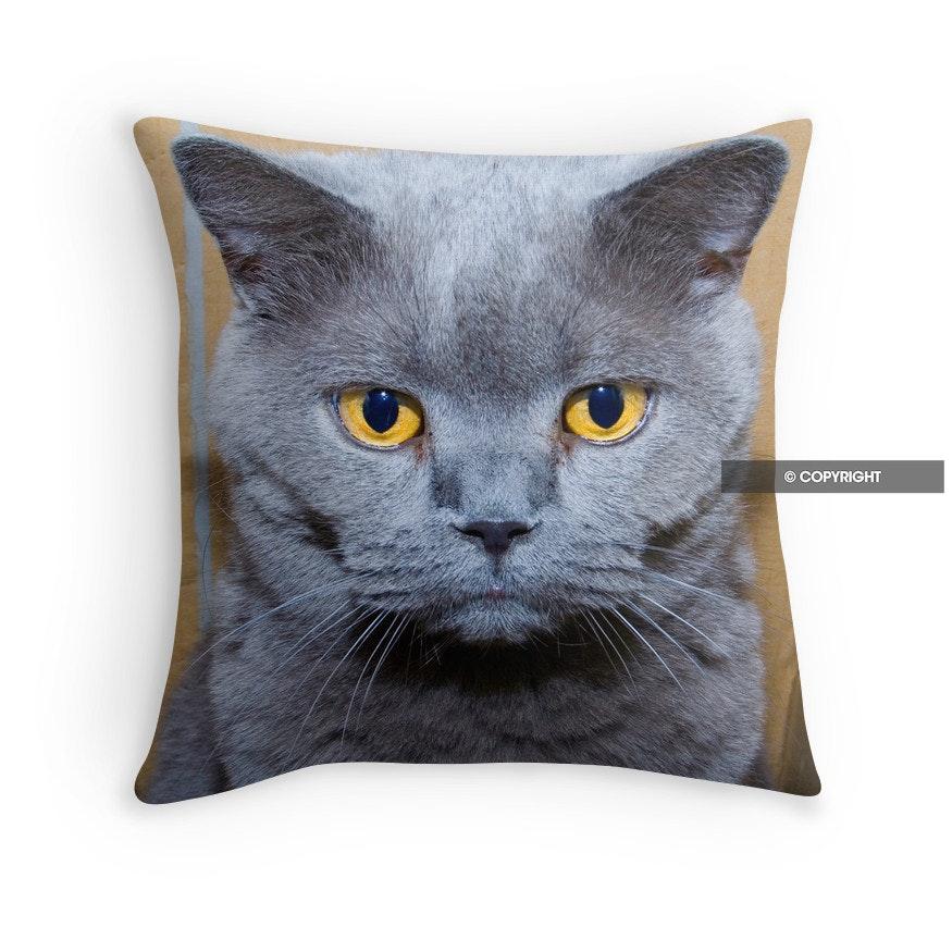 Grumpy British Blue Cat cushion