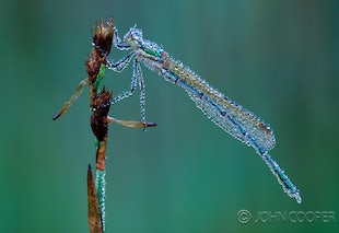 Insects Up-Close