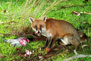 Australian Mammals & Misc.