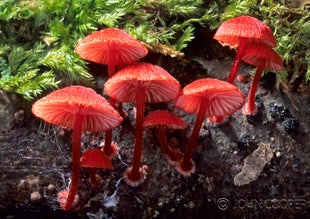 Fungi and Lichens