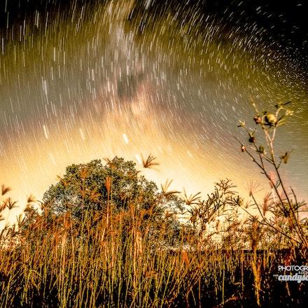 seedy vortex by www.candyscapedesigns.com.au (1 of 1)
