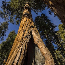 Sequoia National Park - America's second oldest national park, established in 1890, the park is home to the world's largest tree and Mt. Whitney, the highest...