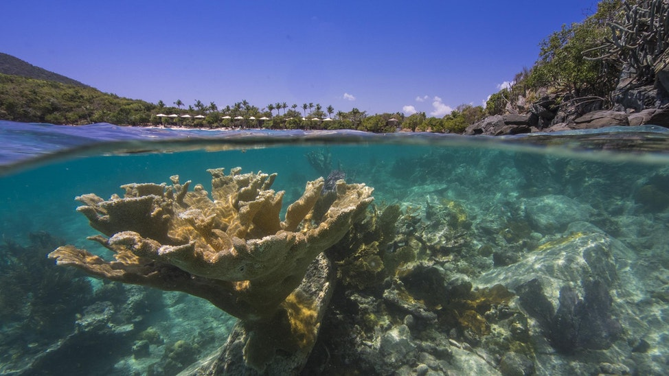 Elkhorn coral and Caneel Resort - Fringing reef along Hawksnest Point with Hawksnest cottages along the beach