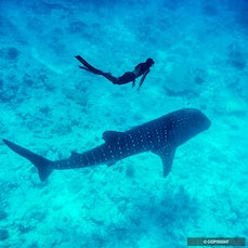 Maldives - Republic of Maldives—coral atolls, whale sharks, & resorts