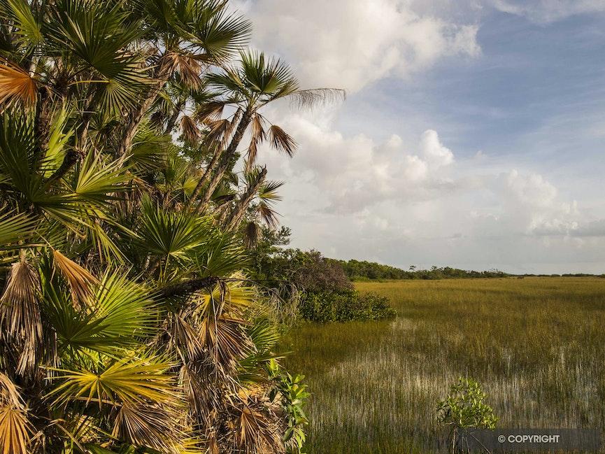 Everglades near Mahogany Hammock - GEDavis