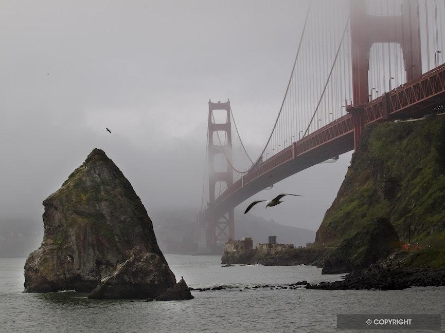 Foggy Gate - Golden Gate Bridge and sea gull on foggy morning, Fort Baker, Golden Gate National Recreation Area, California