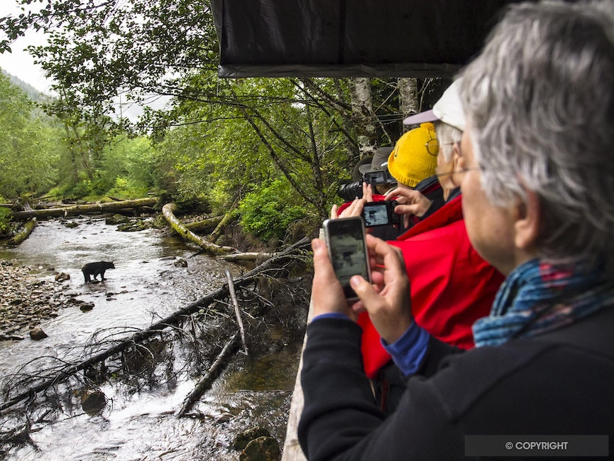Bear Paparazzi - Photographers and an American black bear in the Great Bear Rainforest, British Columbia, Canada