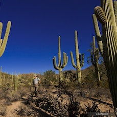 Saguaro National Park - Unique to the Sonoran Desert, Giant Saguaro Cacti range from desert valley floors up to ponderosa pine forests in the mountains...