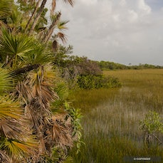 Everglades National Park, Florida - The 'River of Grass' flows over ancient limestone flatter than cement can be poured into huge estuaries along the Gulf...