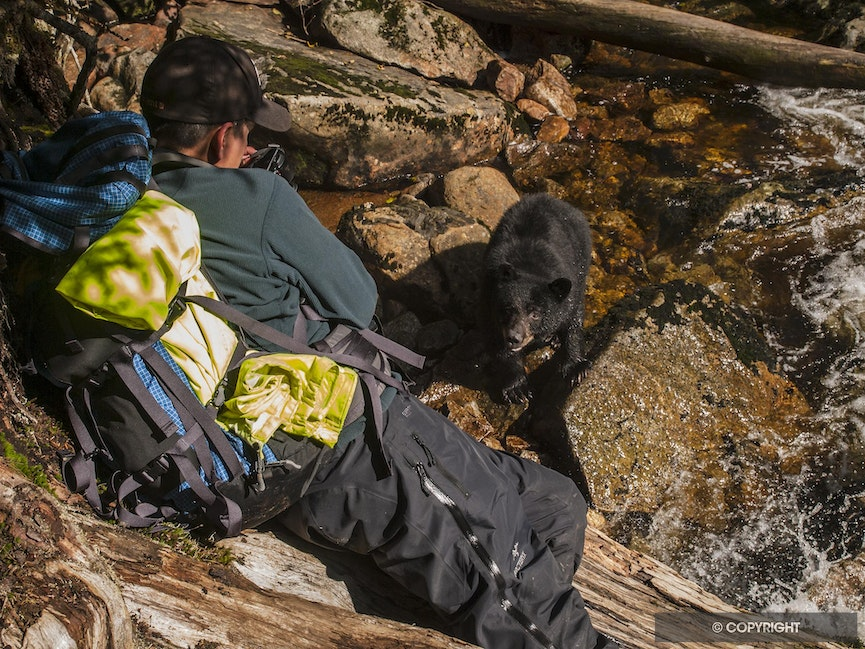 Hello Bear - A Gitga'at guide shows how close you can get to b;ack bears