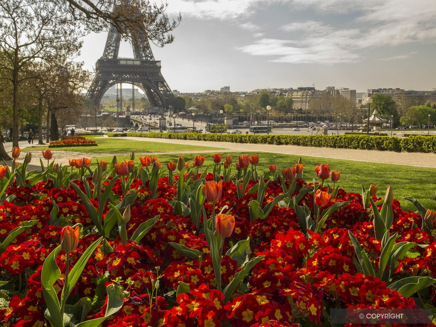 Springtime In Paris - Tulips mark springtime in Paris at the Jardin de Trocadero