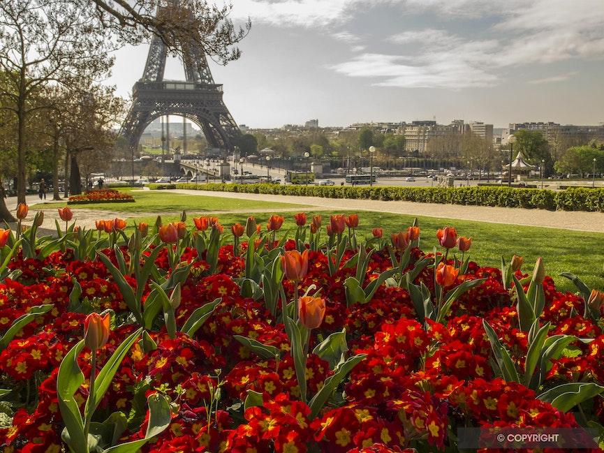 Springtime In Paris - Tulips mark springtime in Paris at the Jardin de Trocadero