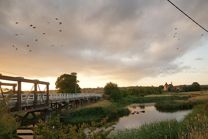 Mulwaree Ponds, Roos Ibis 024 copy - SONY DSC