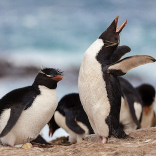 Falkland Islands - Images from my expedition to the Falkland Islands