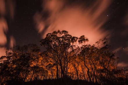 Fake Forest Fire - Park lighting illumiting trees gives a dramatic effect