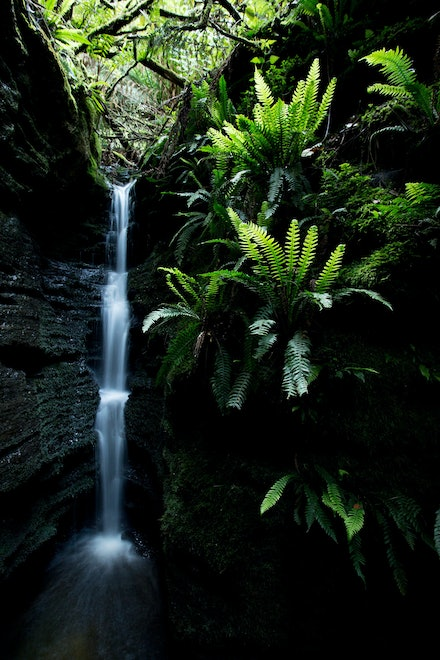 Secret Falls - A small chasm in the foothills of Mount Wellington.  A perfect place to reflect, renew and recharge.  Wellington Park, Hobart,  Tasmania....