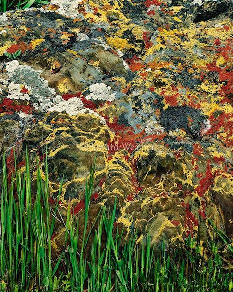 0180 Lichen near Snelling, CA