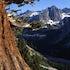 0041 Juniper, Le Conte Canyon, SEKI