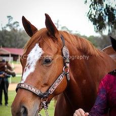 Grenfell Western show 25/5/2014 (Private Shoot)