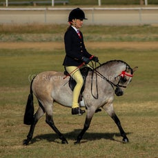 South West Hack Spring Show Junee 10/8/14