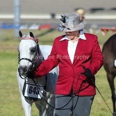 aust saddle pony Country Championships. 24/8/14
