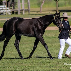 2014 Southern Highlands Stock Horse Branch Show DAY 1
