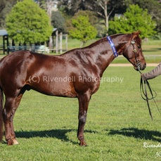 2014 Southern Highlands Stock Horse Branch Show DAY 2