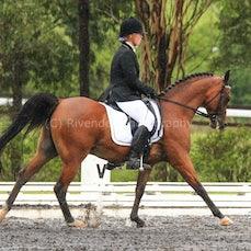 East Coast Arabian Champs 28/1/15 (Dressage)