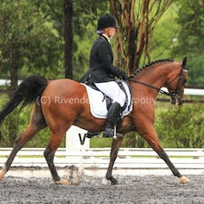East Coast Arabian Champs 28/1/15 (Dressage)