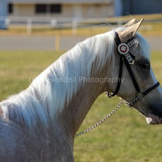 Cootamundra Foal and Young Stock show.2015