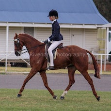 2017 Cootamundra Winter Hack Show (Ridden)
