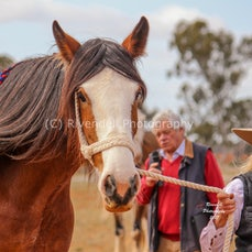 2017 Barellan Clydesdale and Heavy Horse Show
