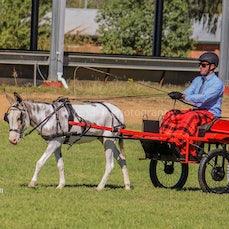 2018 National Donkey & Mule Show Day 2