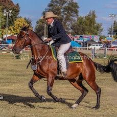 2018 Bathurst Royal, Working Stock Horse Classes  ( Fri)