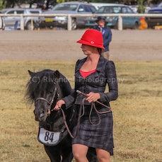 2018 Bathurst Royal . Shetland Pony. Mini Pony ( Sun}