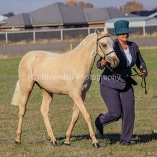 2018 Cootamundra Foal & Young Stock show ( Foals )