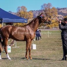 2018 Cootamundra Foal & Young Stock show ( Young Stock)