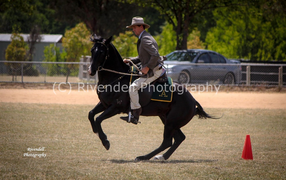 Southern Highland Stock Horse Branch Show 2.11.13 510