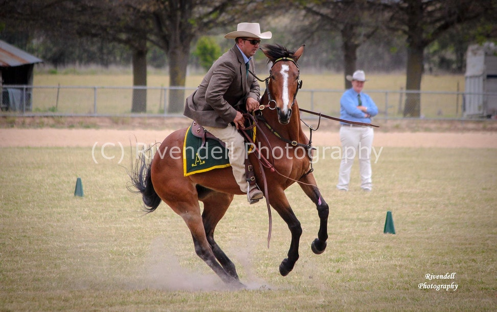 Southern Highland Stock Horse Branch Show 2.11.13 694