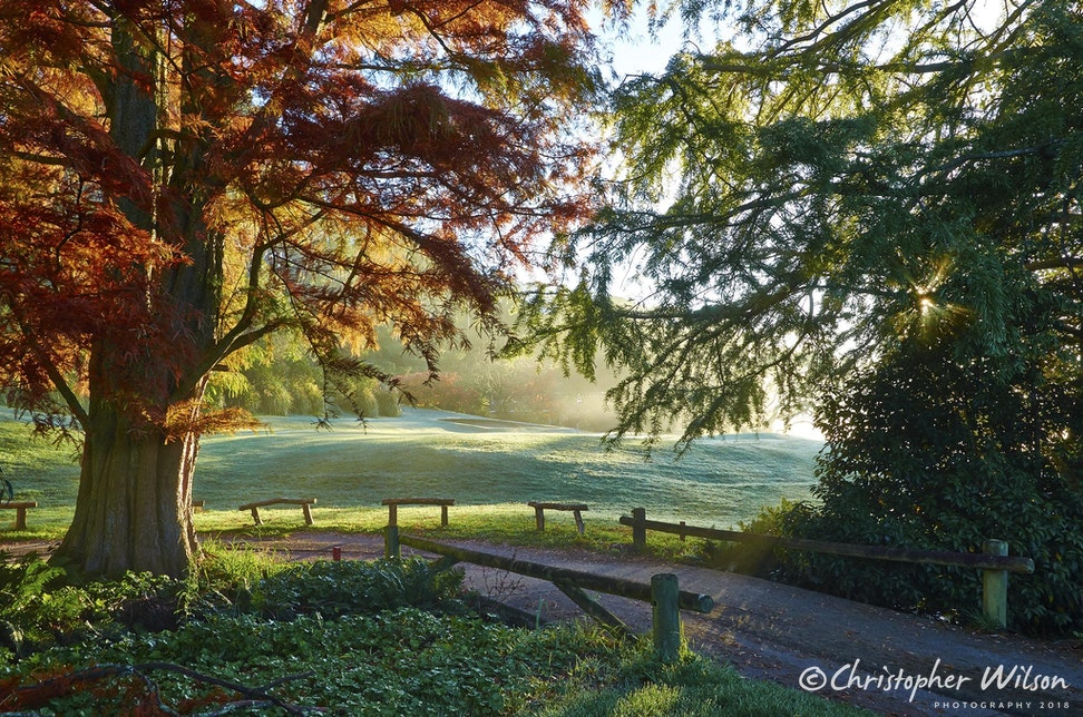 15th Autumn 14 - Looking through the trees to the 15th green, again early in the morning