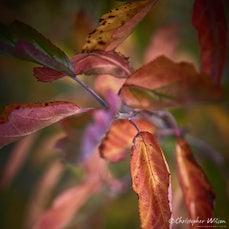 Autumn in Blackheath 2016