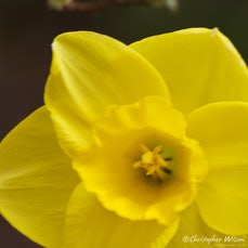 Spring flowers 2012 - Spring time is a time for renewal and the gardens starting to colour again.