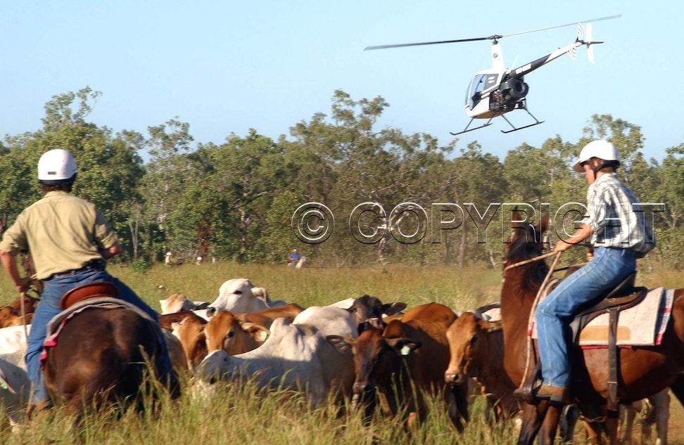 rural coll ..chopper 33